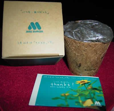 2005年 モスの日(3月12日) ミニひまわり栽培セット